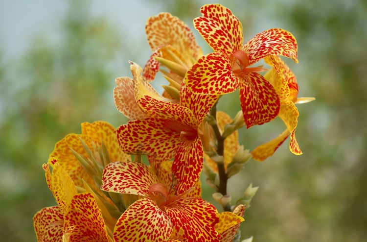 Orange Flowers Pictures. Orange Lily flowers