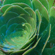 Closeup of a succulent plant with water drops sitting on it