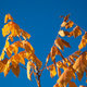 Autumn leaves against a blue sky